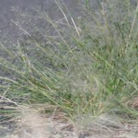 Elastic grass