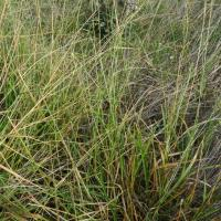 Early spring grass